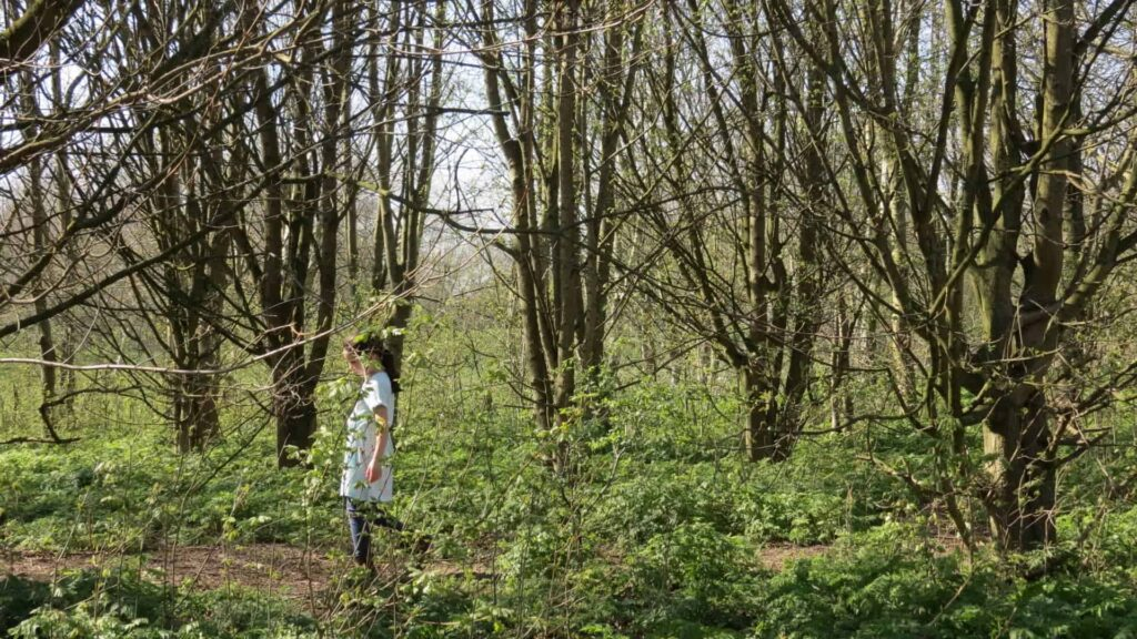 fun things for kids to do on a woodland walk