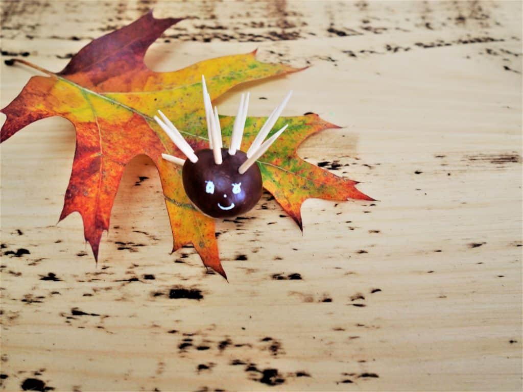 Make a conker hedgehog Five things to do with conkers. 5 things children can do with nature and woodland walks. Autumnal Woodland Walks with Kids.