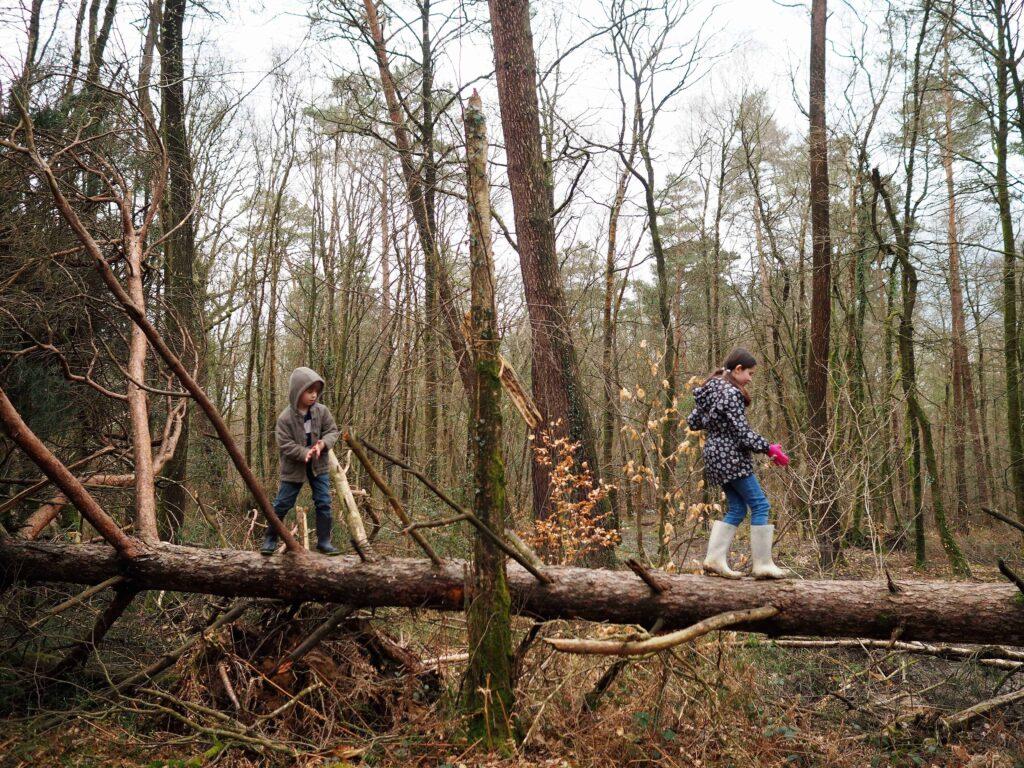 Woodland Walks. fun Muddy walks