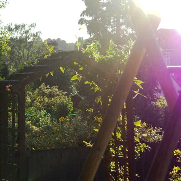 sunny summer evening