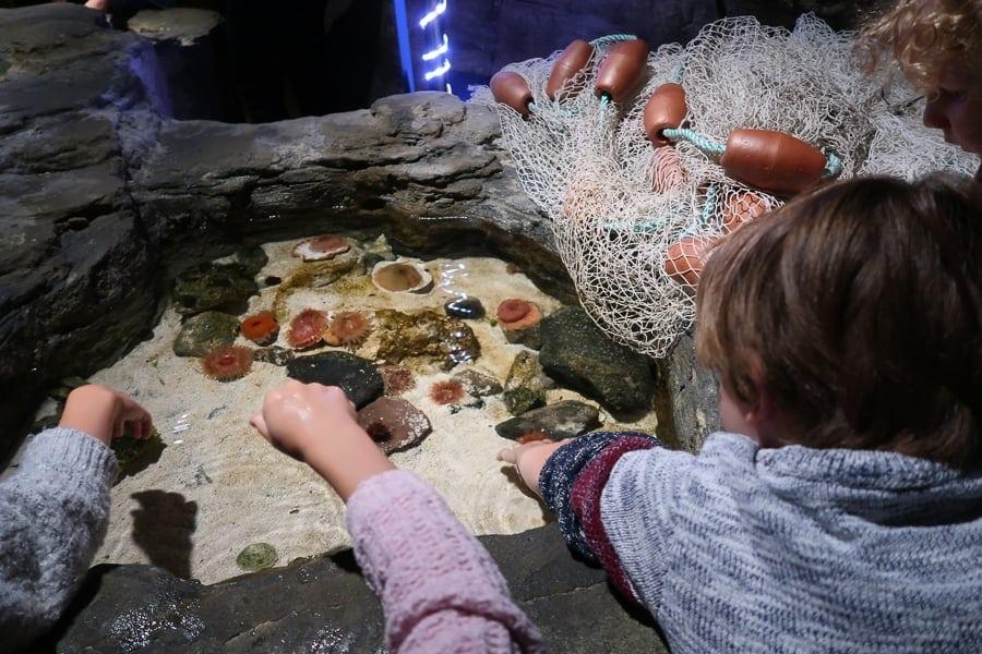 touching a starfish