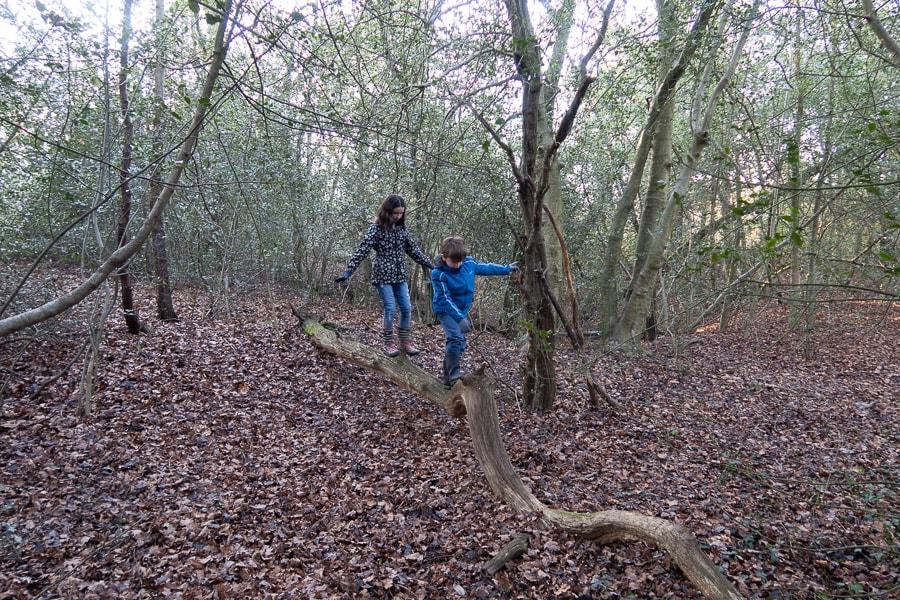 kids balancing on a log